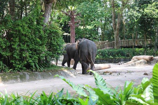 新加坡动物园照片