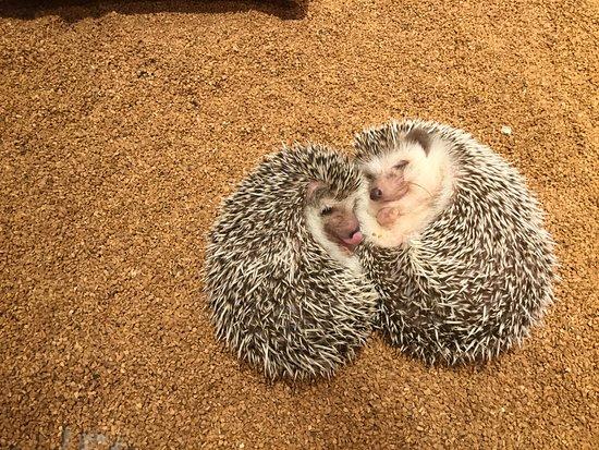 Hedgehog Cafe Harry Yokohama: ふたりで仲良く秘密のお話。