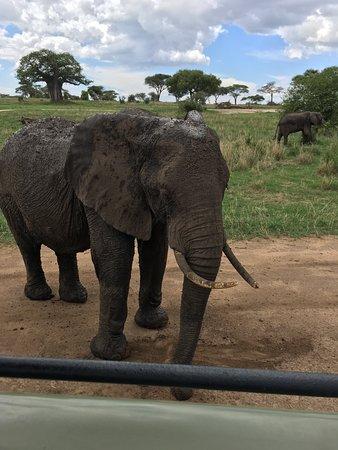 Natural Attraction Safaris : Tarangire National Park