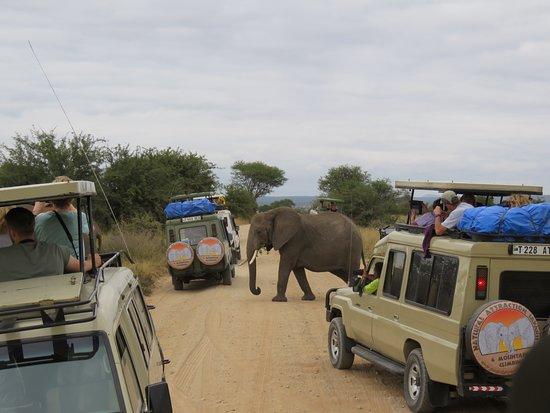 Natural Attraction Safaris : Elephant Crossing