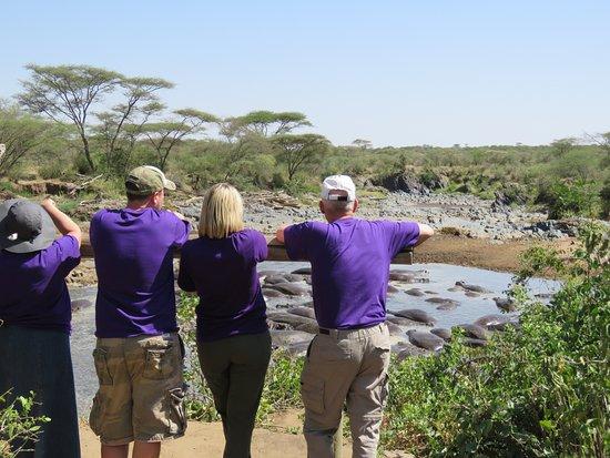 Natural Attraction Safaris : Hippo Pool