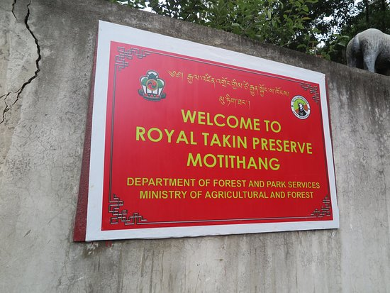 Motithang Takin Preserve照片