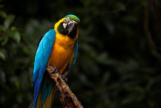 The Crags, Sydafrika: Macaw watching you