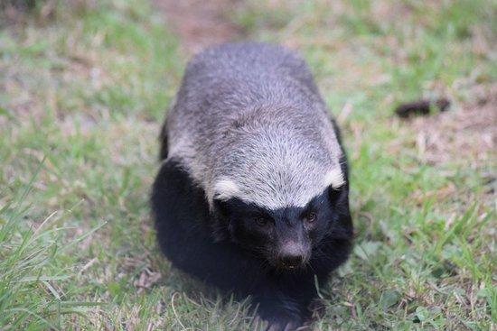 Jukani Wildlife Sanctuary照片
