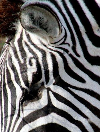 Zoo Zurich : Pferd im Schlafanzug