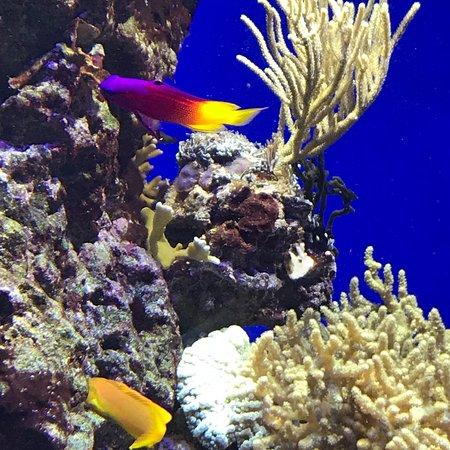 丹麦国家水族馆照片