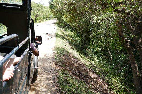 Kaudulla National Park照片
