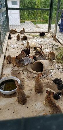 Badasqan Aile Restorant: зайцы
