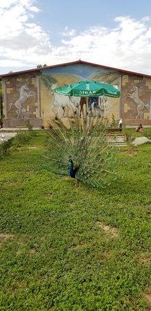 Badasqan Aile Restorant: павлины