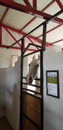 Badasqan Aile Restorant: лошади