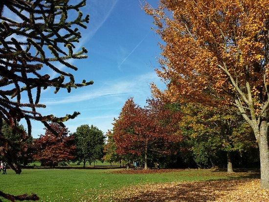 Horsham Park: Autumn