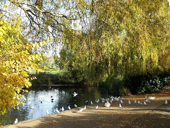 Horsham Park : Autumn - Pond