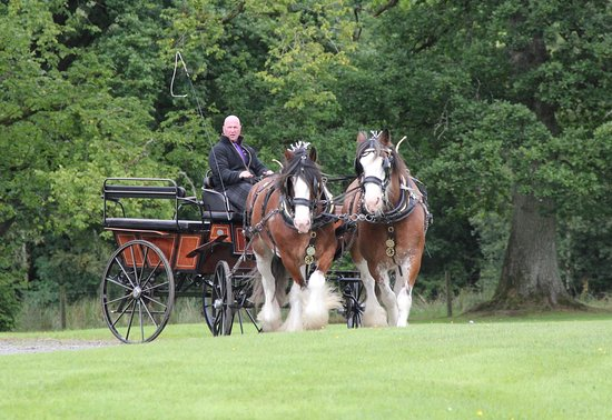 Blackstone Clydesdales & Dig-a-Day Experience: Alfie and Randolf on route to pick up the bride