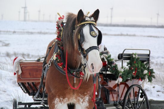Blackstone Clydesdales & Dig-a-Day Experience: Special delivery for Alfie
