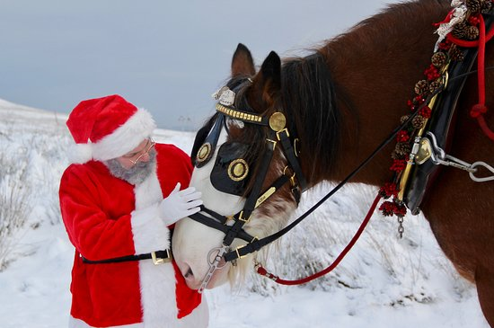Blackstone Clydesdales & Dig-a-Day Experience: Santa cuddles for Alfie