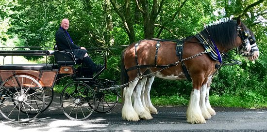 Blackstone Clydesdales & Dig-a-Day Experience: All dressed to impress