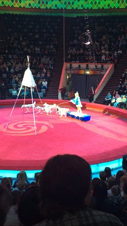 Kazan Circus: Олени