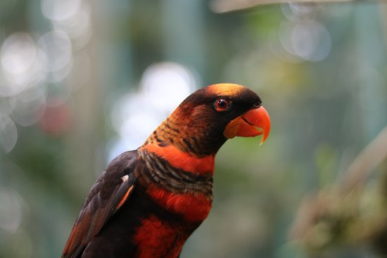 Ticket voor algemene toegang tot Bali Zoo: A parrot