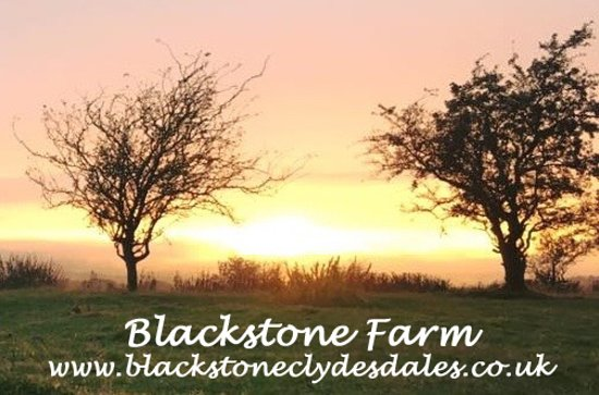 Blackstone Clydesdales & Dig-a-Day Experience: Summer nights at Blackstone