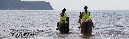 Blackstone Clydesdales & Dig-a-Day Experience: Summer Beach time at Ayr
