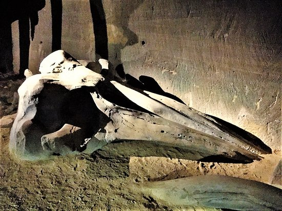 Le Mystère des Faluns - Les Perrières: Des lieux créés par des ouvriers carriers aux formes de cathédrales souterraines