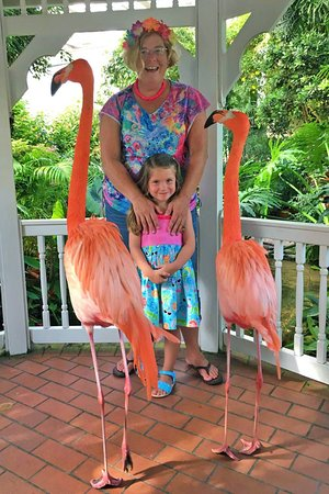 Key West Butterfly and Nature Conservatory: Flamingo Mingle with Rhett and Scarlett
