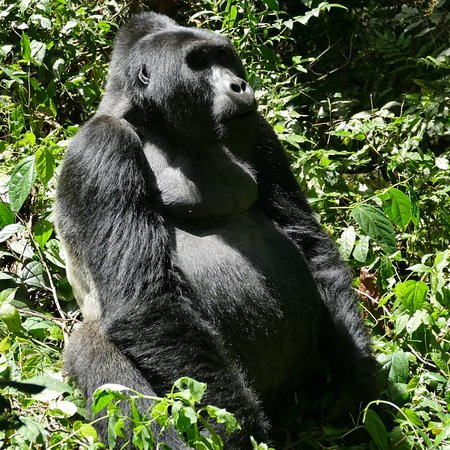 Africa Adventure Safaris : Bwindi Gorilla Tracking