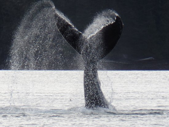 Tide Rip Grizzly Tours: Whales Tail
