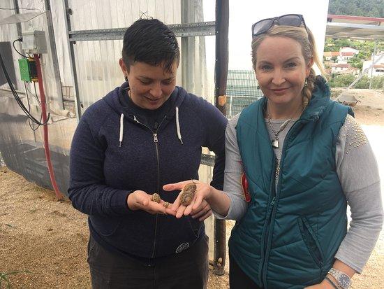 Portugal Farm Experiences: Portugal Farm Experience - Snail Farm Experience