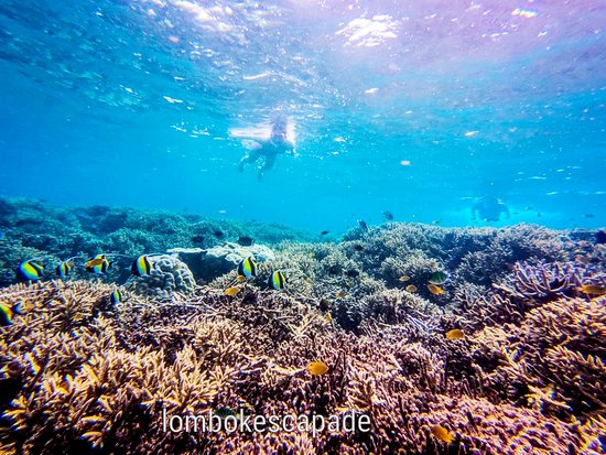 Snorkeling trip with lombok escapade