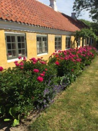 Museumcaféen Brøndums Havehus (Skagens Museum): Haven er fyldt med blomstrende pæoner og valmuer