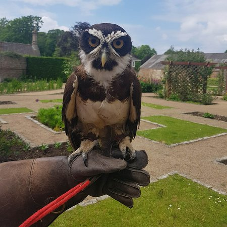 St. John, UK: Spectacle Owl