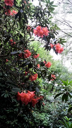 Lea Gardens: rhododendrons