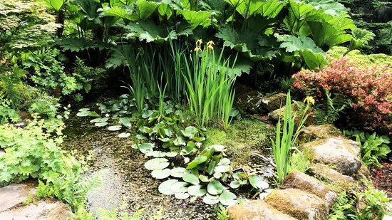 Lea Gardens: pond