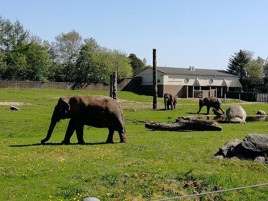 Givskud Zoo: Elephants
