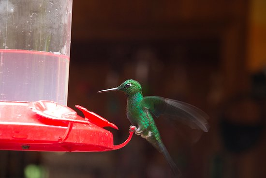 Stella's Bakery Art Coffee Shop: Hummingbird on feeder by outside seating area