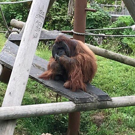 Ảnh về Jersey Zoo