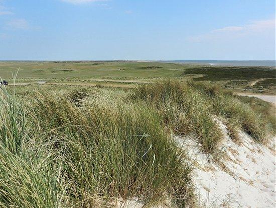Ellenbogen: Schtterende duinen