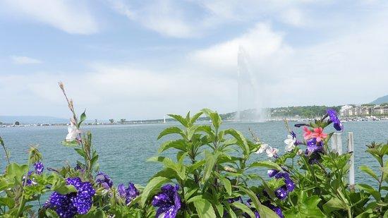 杰特喷泉照片