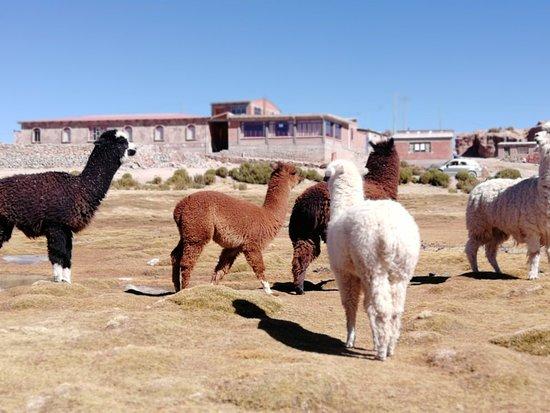 Expediciones Estrella Del Sur Bolivia Photo