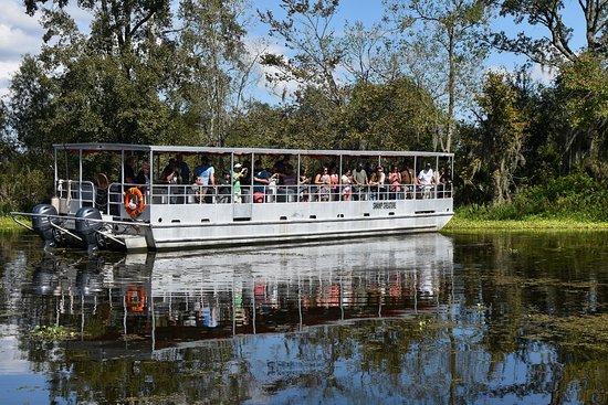 Lafitte, LA: Join us on a 90 minute narrated tour through the swamps!