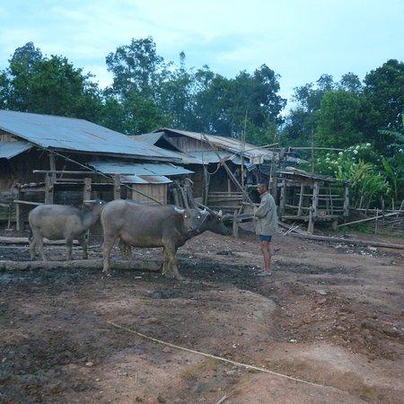 Phongsaly, Laos: photo3.jpg