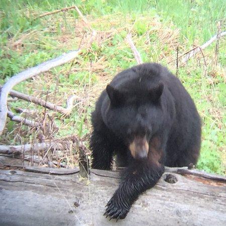 Jackson Hole Wildlife Safaris Φωτογραφία