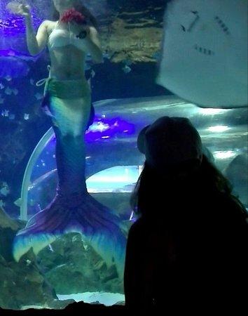 Yibin Joy Oceanworld: Mermaid show