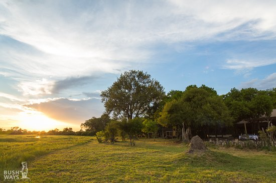 Landscape - Picture of Sango Safari Camp, Moremi Game Reserve - Tripadvisor