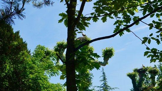 斯特拉斯堡桔园照片