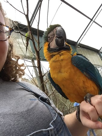 Maleny, Australia: I got to see and hold so many different types of birds!