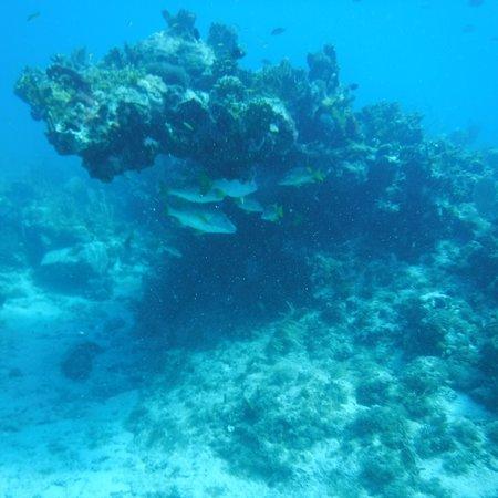 Low Key Watersports: photo5.jpg