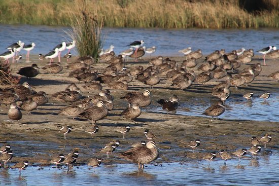 Coorong National Park: There were so many of them. Wow!