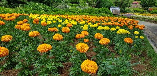 Nokonoshima Island: yellow and orange